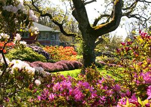 Abkhazi garden in Victoria, BC, YYJ, Visitor in Victoria, Gardens in Victoria