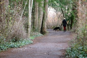 Favorite dog walking trail around Elk Lake, Victoria, BC, Visitor in Victoria