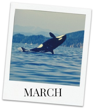 Festivals & special events in March in Victoria, BC, YYJ