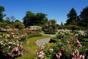 rose garden at government house, victoria, bc, gardens in Victoria, Visitor in Victoria