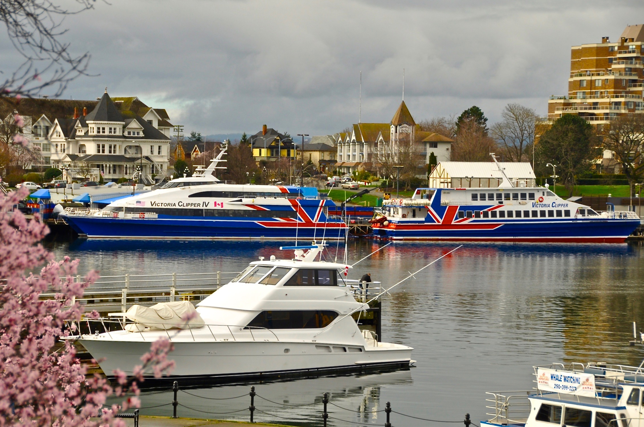 Victoria Clipper Catamarans in Victoria Harbour