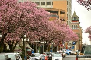 Victoria Blossoms