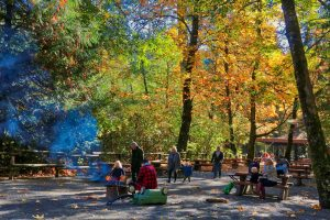 Goldstream Park Picnic Area