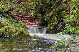 Goldstream River, Goldstream Provincial Park