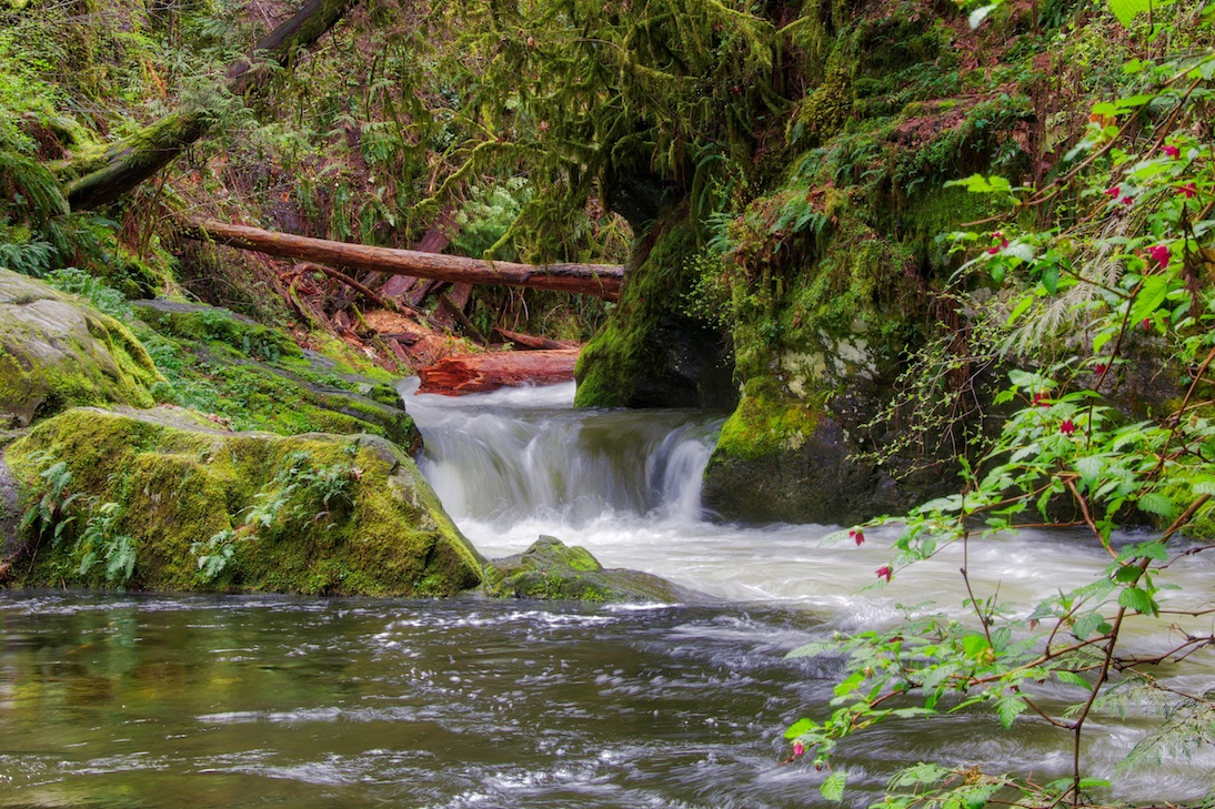 Goldstream River, Goldstream Provincial Park