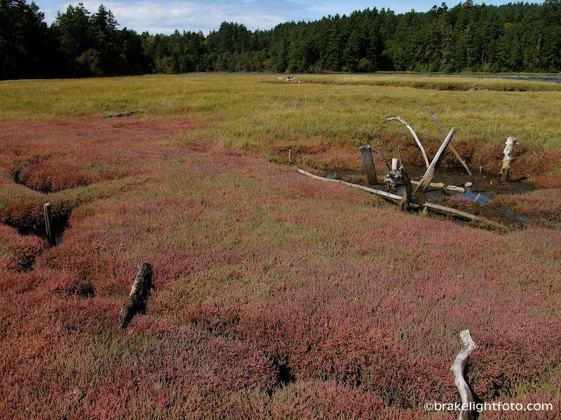 Salt Marsh at Witty's Lagoon