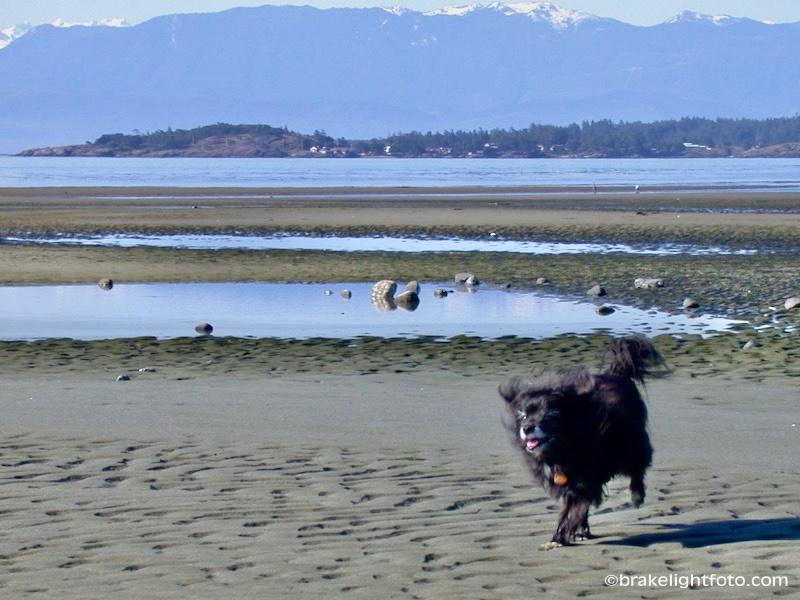 Sand Flats at Wittys Lagoon