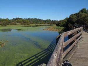A pond along the Lochside Trail, Victoria, BC Visitor in Victoria