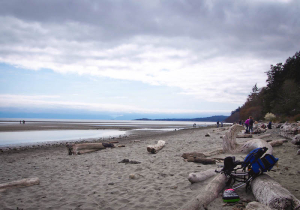 beach at witty's lagoon
