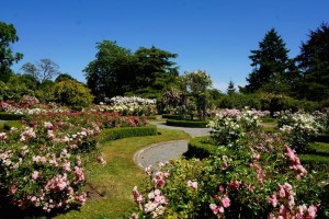 5 best gardens in victoria bc visitor in victoria rose garden at government house victoria bc gardens in victoria visitor in thecheapjerseys
