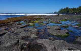 Botanical Beach, Port Renfrew, BC
