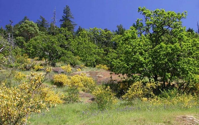 Bear Hill Regional Park, Victoria, BC