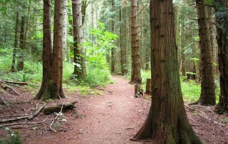 Horth Hill Regional Park in Victoria, BC