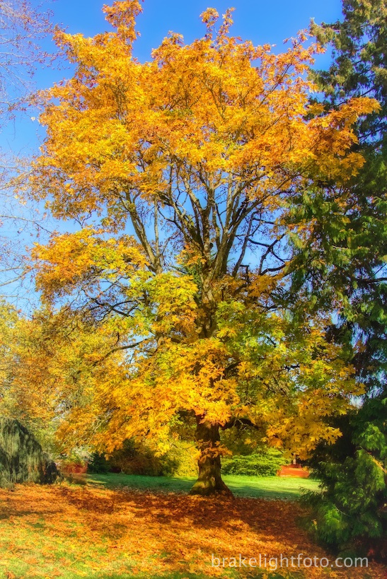 Fall Colours at Dominion Brook Park