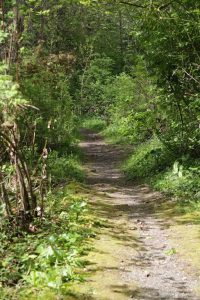 Forested Path in Coles Bay Regional Park