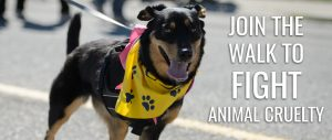 Paws for a Cause, Victoria, BC