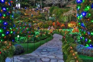 Butchart Gardens Christmas Lights Visitor in Victoria
