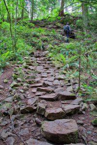 Surveryor's Trail, John Dean Provincial Park