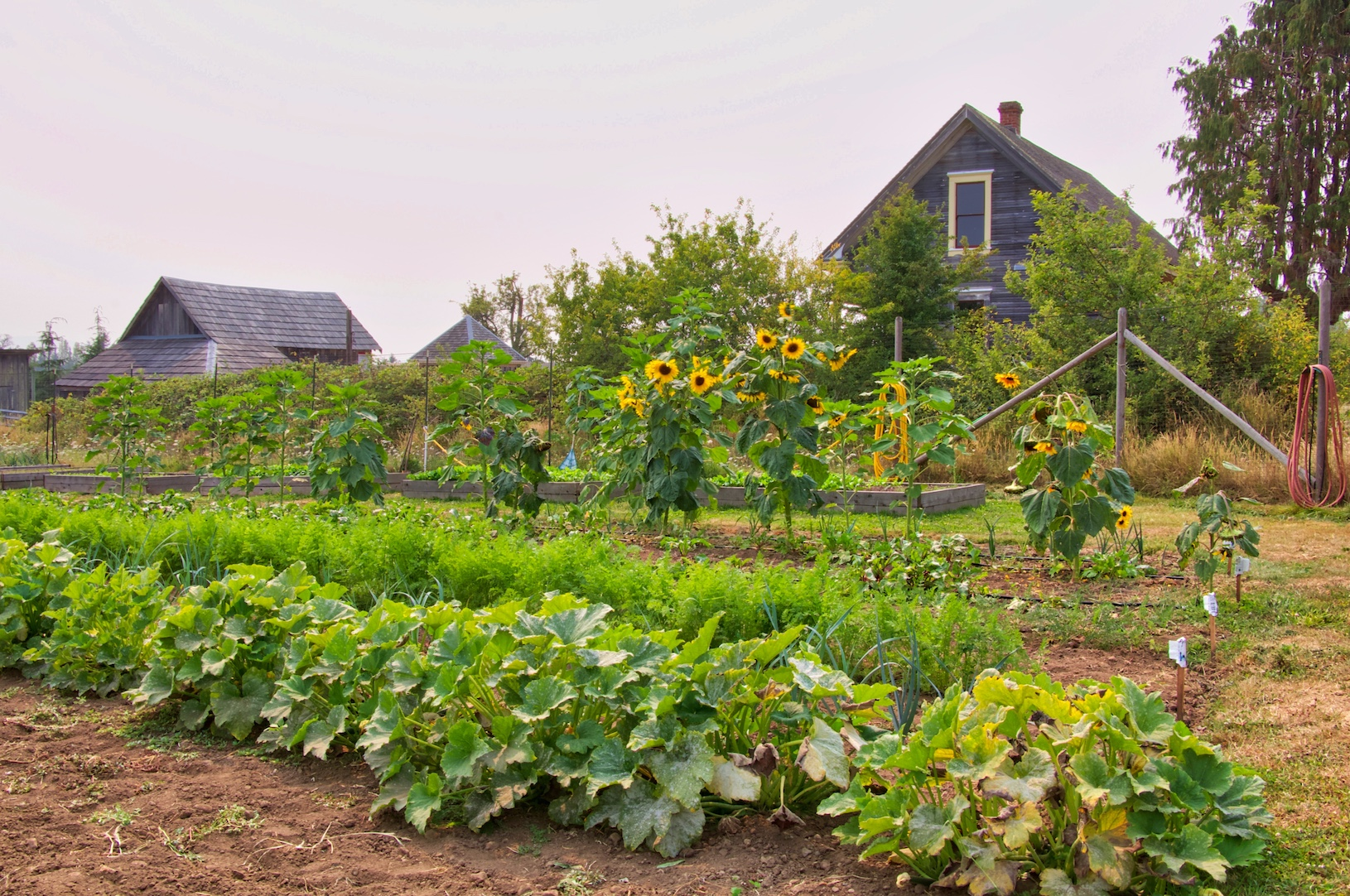 Farmlands Trust Crops at Newman Farm Park