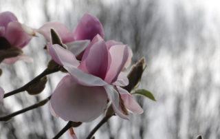 Spring flowers, Victoria, BC, visitorinvictoria.com