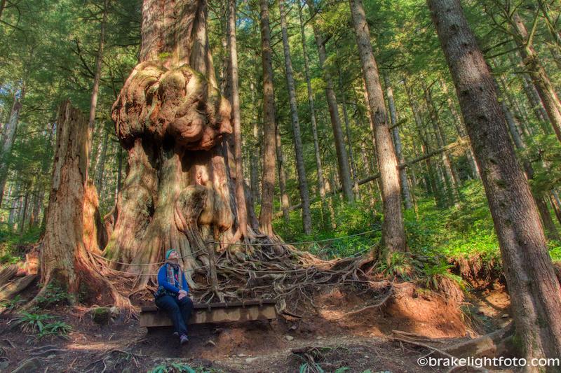 Avatar Grove Worlds Gnarliest Tree