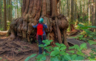 Giant Trees at Avatar Grove