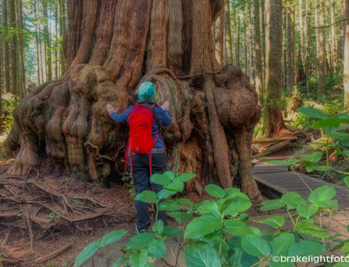 AVATAR GROVE – PORT RENFREW